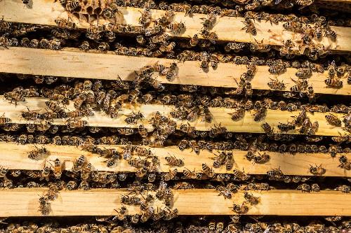 Beekeepers Sweeten Solar Sites With the 'Tesla of Honey'
