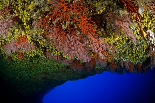 Underwater Cave Discovery Features Stunning Red Coral Garden