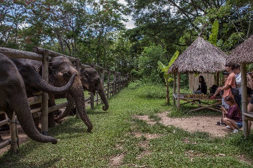 What I learned investigating the wildlife tourism industry