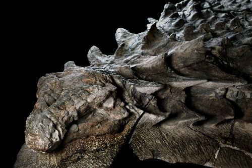 It's Official: Stunning Fossil Is a New Dinosaur Species
