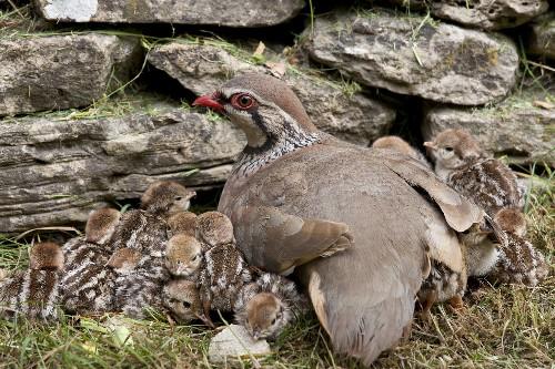 Around the World, Farmland Birds Are in Steep Decline