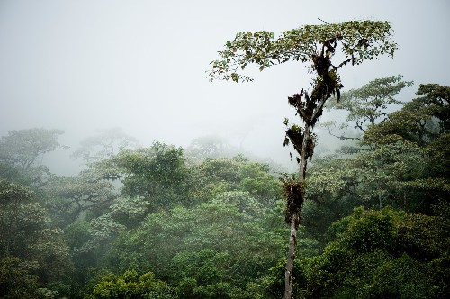 Traces of Lost Society Found in 'Pristine' Cloud Forest