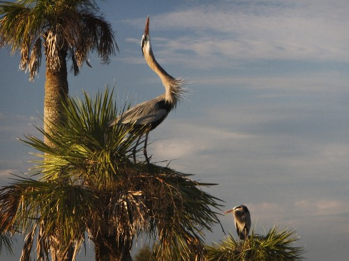 Florida by Land: Places to Photograph Wildlife