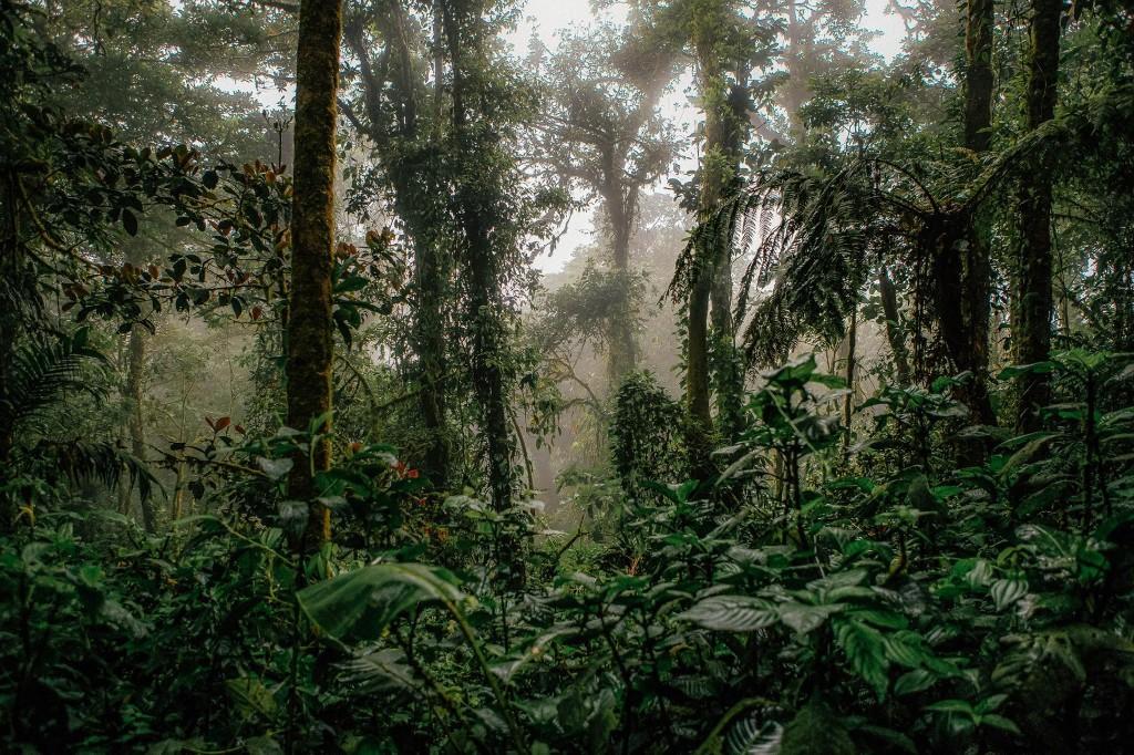 Costa Rica's Monteverde faces an eco-tourism crisis