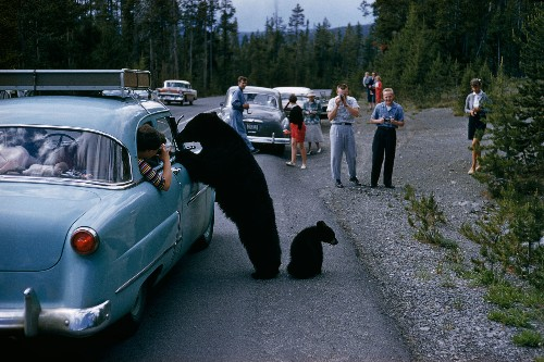 6 Accidents That Actually Happened in National Parks