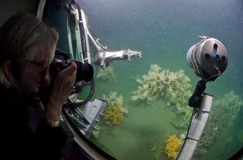 """First-Ever Submarine Dive on Vancouver's """"Living Fossils"""": Glass Sponge Reefs"""