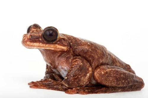 Famous Frog Toughie Dies, Sending Species to Extinction
