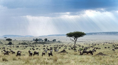 How Do African Grasslands Support So Many Plant-Eaters?