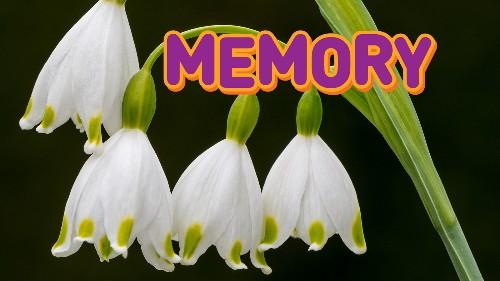Spring Flower Memory