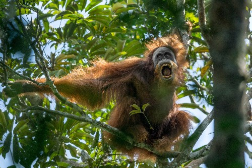 See orangutans, jaguars, and other jungle animals in their natural habitats
