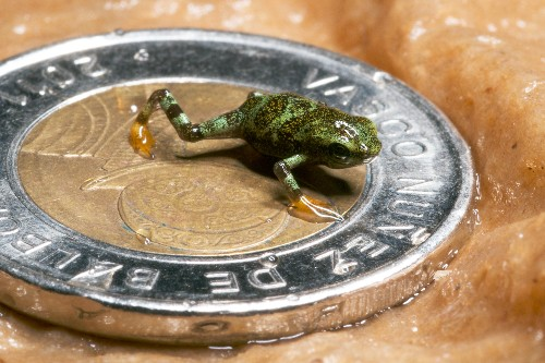 Endangered Frogs Get Helping Hand