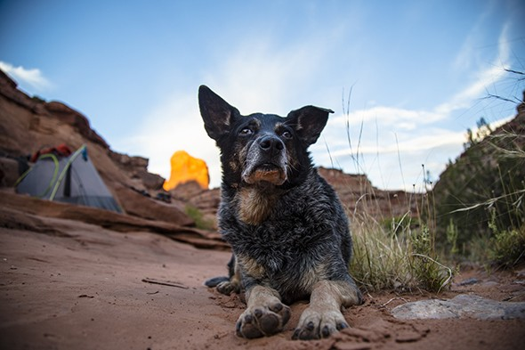 How to Hike the Backcountry With Your Furry Best Friend