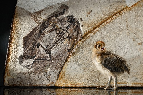 Feathered Fossils Give Scaly Dinosaurs a Makeover