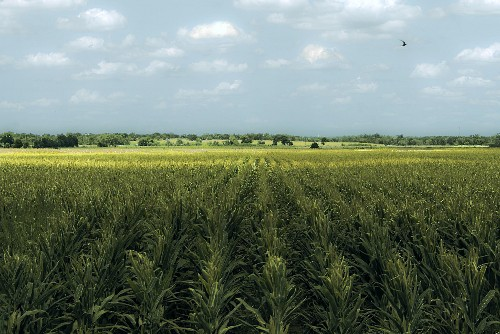 My GMO Journey: From Skeptic To Supporter