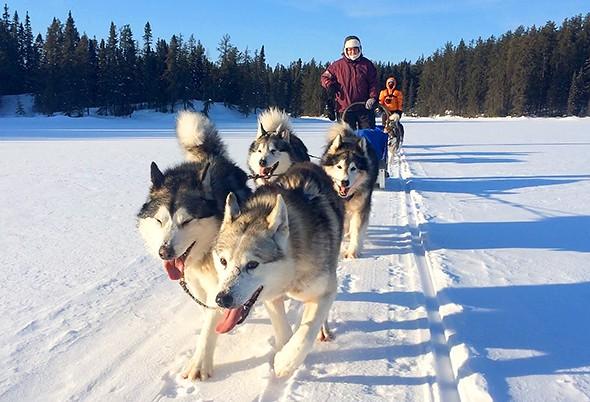 To Mush or Not to Mush: Dogsledding in Québec