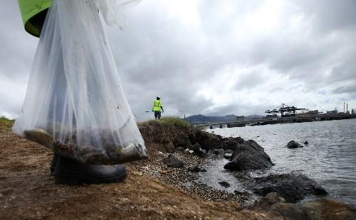 Huge Molasses Spill Off Hawaii: A Diver's Report