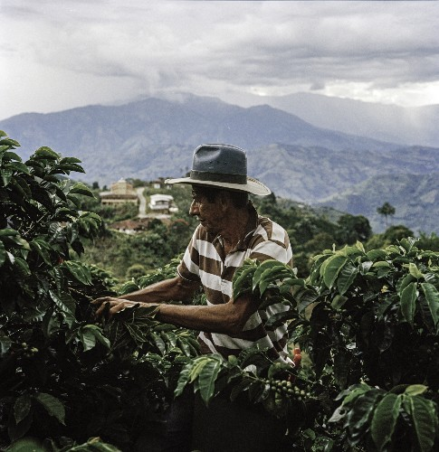 Easing the impact of climate change on coffee growers