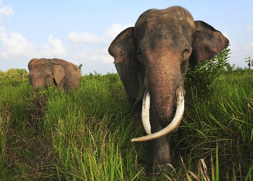 How to Scare Elephants—For Their Own Good