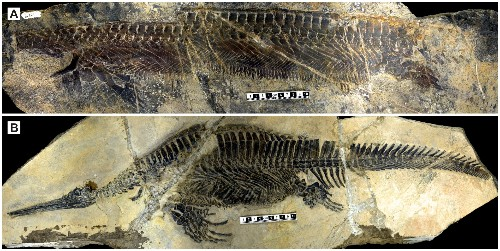 Marine Reptile's Weird Body Armor a Sign of Life's Great Recovery