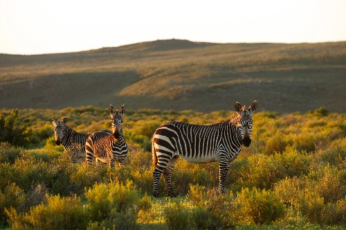 These African lodges lead the way in wildlife conservation