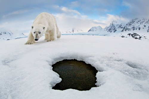 See what happens when a polar bear finds a camera