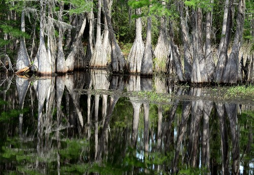 Florida by Land: Hike the Florida National Scenic Trail