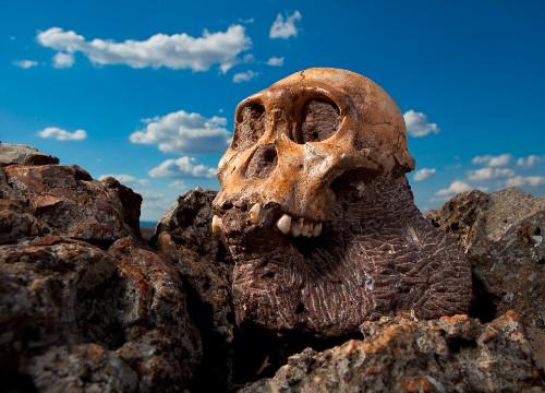 Human Ancestors Ate Bark—Food in Teeth Hints at Chimplike Origins