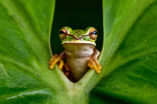 The Search for Missing Frogs Brings Some Species Back From the Dead
