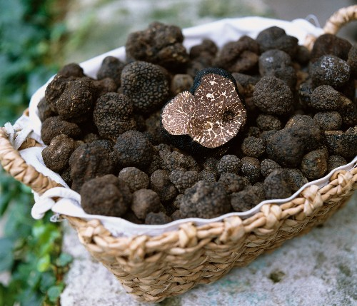 The Trouble With Truffles
