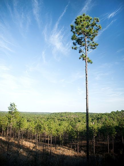 Louisiana: Take the Trail to Nowhere