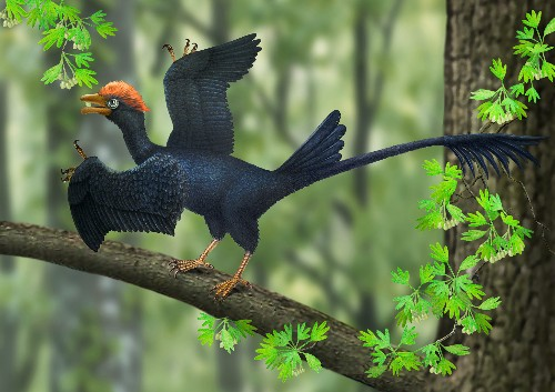 Two-Tailed Ancient Bird Uncovered