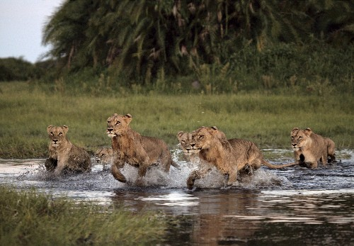 Stunning Pictures: Inside Africa's Last Wetland Wilderness
