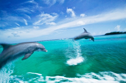 Mystery Solved: How Do Dolphins Swim So Fast?