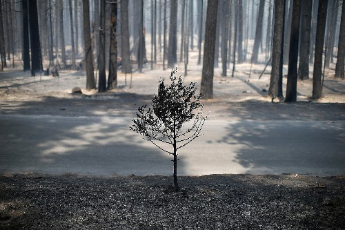 Opinion: Don't Log Burned Forests—Let Nature Heal Them
