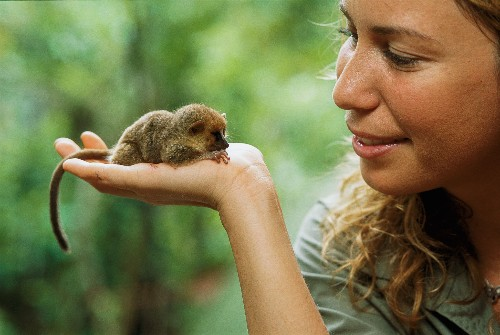 Small Wonder: What Are the World's Tiniest Animals?