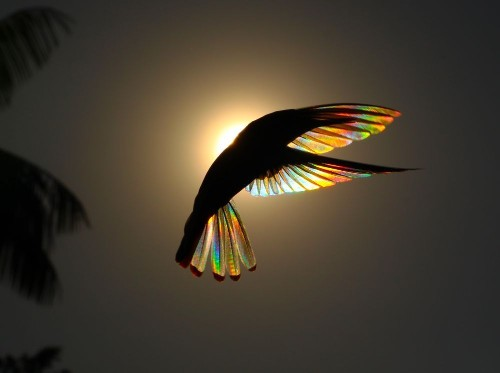 Winged Prism Photo by christian spencer — National Geographic Your Shot