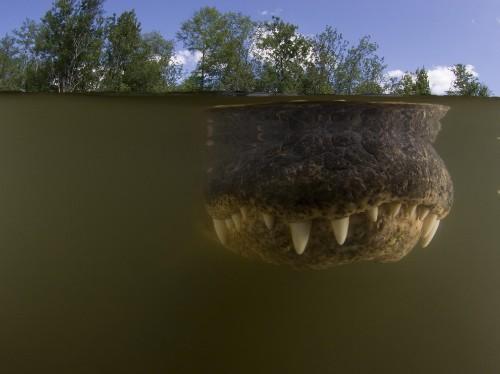 Florida Wildlife Photos