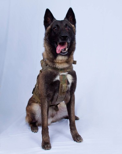 The rigors of war dog training and why Conan is our latest war hero