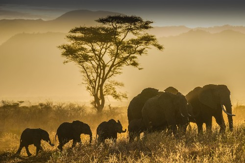 30 stunning wildlife pictures from across the globe