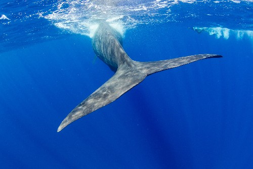 More Big Whales in Oceans Could Mean More Fish, Scientists Find