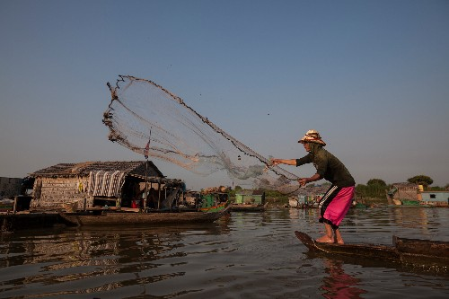 River sanctuaries help giant fish recover in Southeast Asia