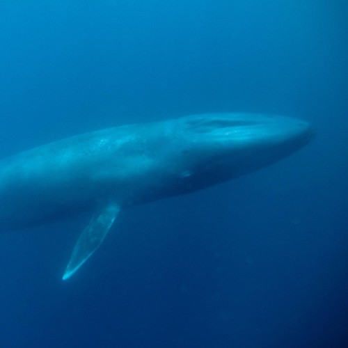 Blue Whale | National Geographic