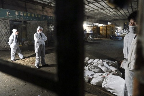 Pictures: New Bird Flu Hits China