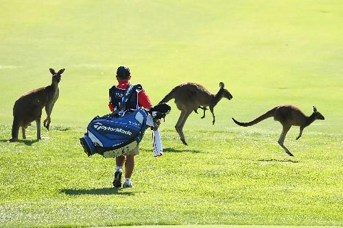 Kangaroo: The Next Alternative Meat?