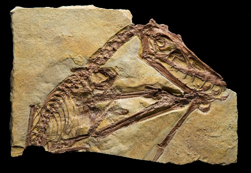 New Golden Age for Pterosaurs, Flying Reptiles of the Dinosaur Era