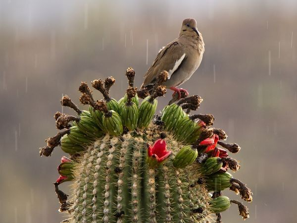 'The Beauty of Birds' Story and Pictures — National Geographic Your Shot