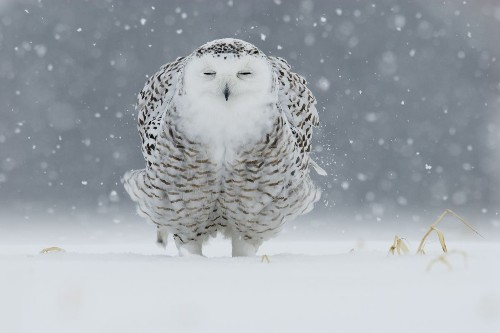 Morning snow Photo by Serge Chenard — National Geographic Your Shot
