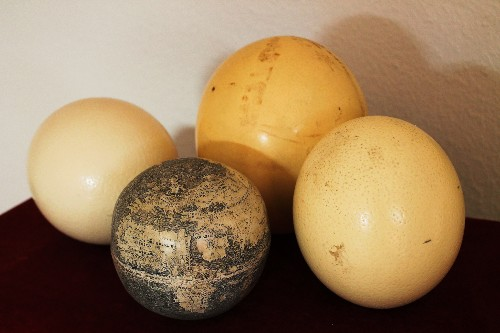 Oldest Globe of New World Carved on Ostrich Eggs?
