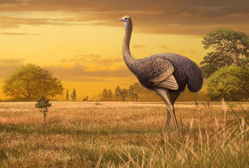 12-foot bird lived alongside early human relatives, fossils reveal