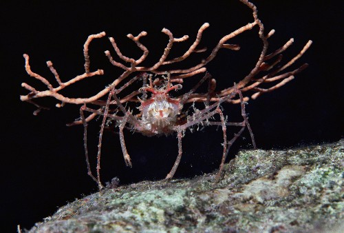Natural Bling: 6 Amazing Animals That Decorate Themselves